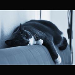 lazy cat Naniel