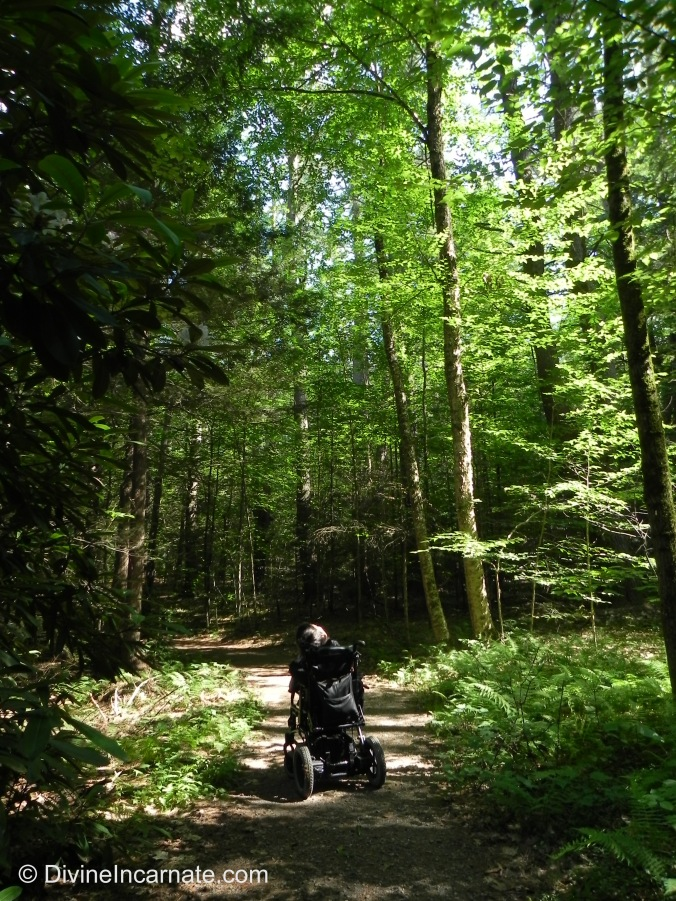 wheelchair, forest, New Hampshire