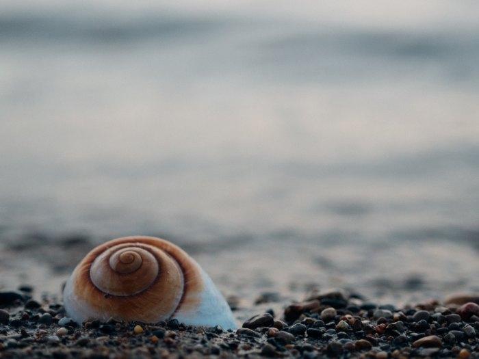 beach, seashell, Spirals