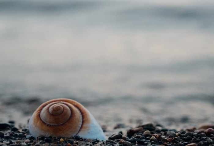 beach, seashell, Spirals