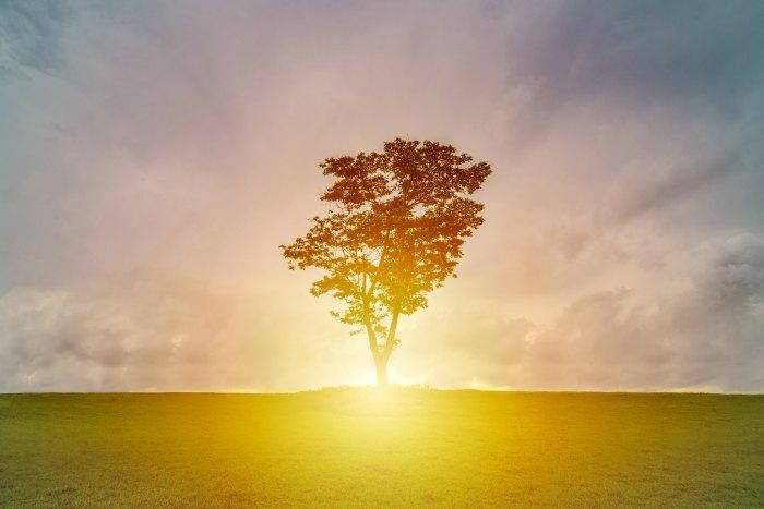 Tree, earth, light, Creation