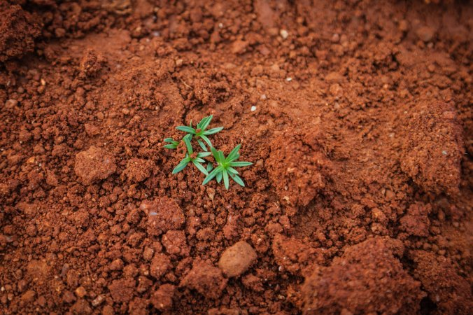 seed, dirt, seedling, growth, sower
