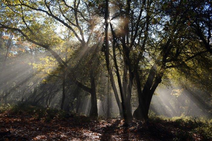 Tree, sunlight, forest