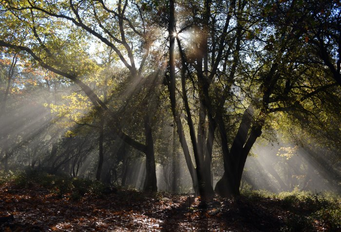 Tree, sunlight, forest