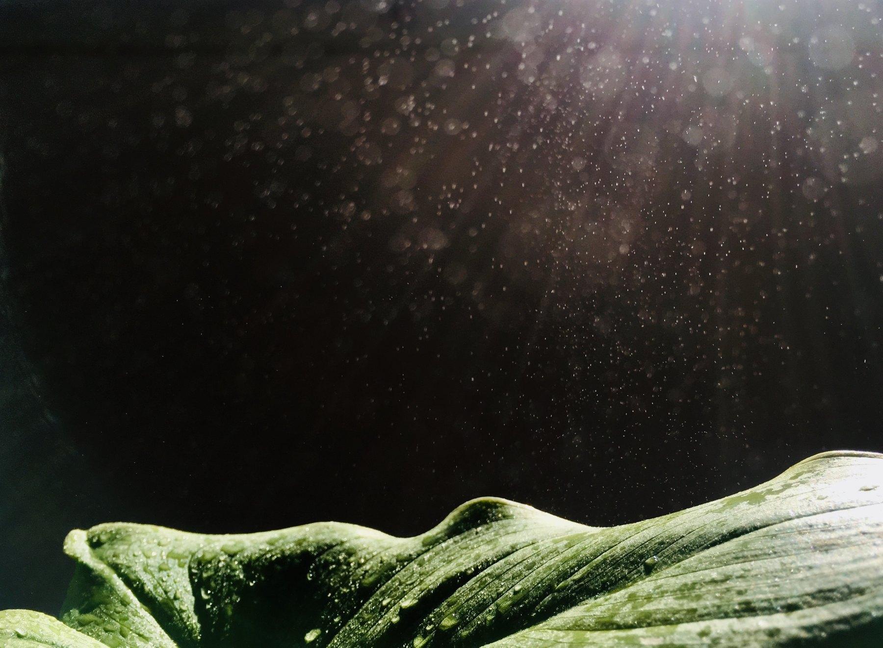 rain, nature, sunlight, beauty