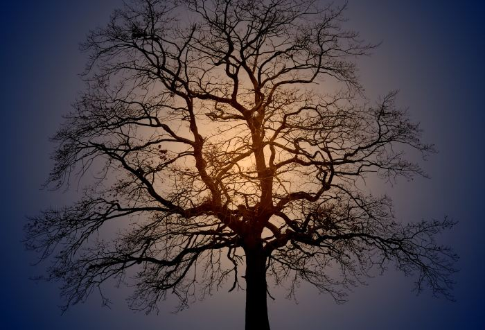 bare oak tree like arteries