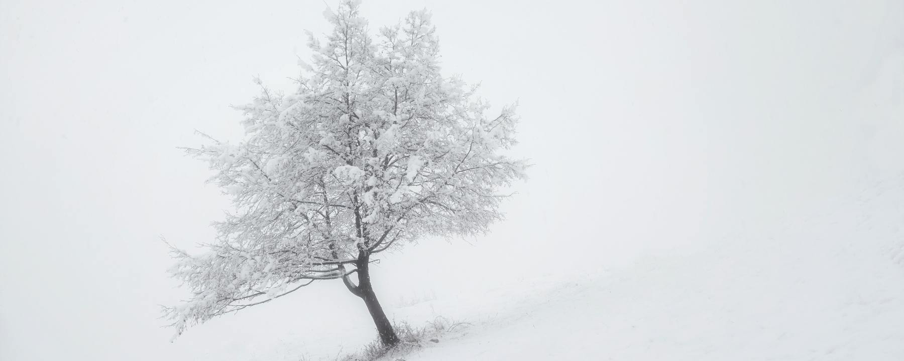 snow fallen heavy on a tree