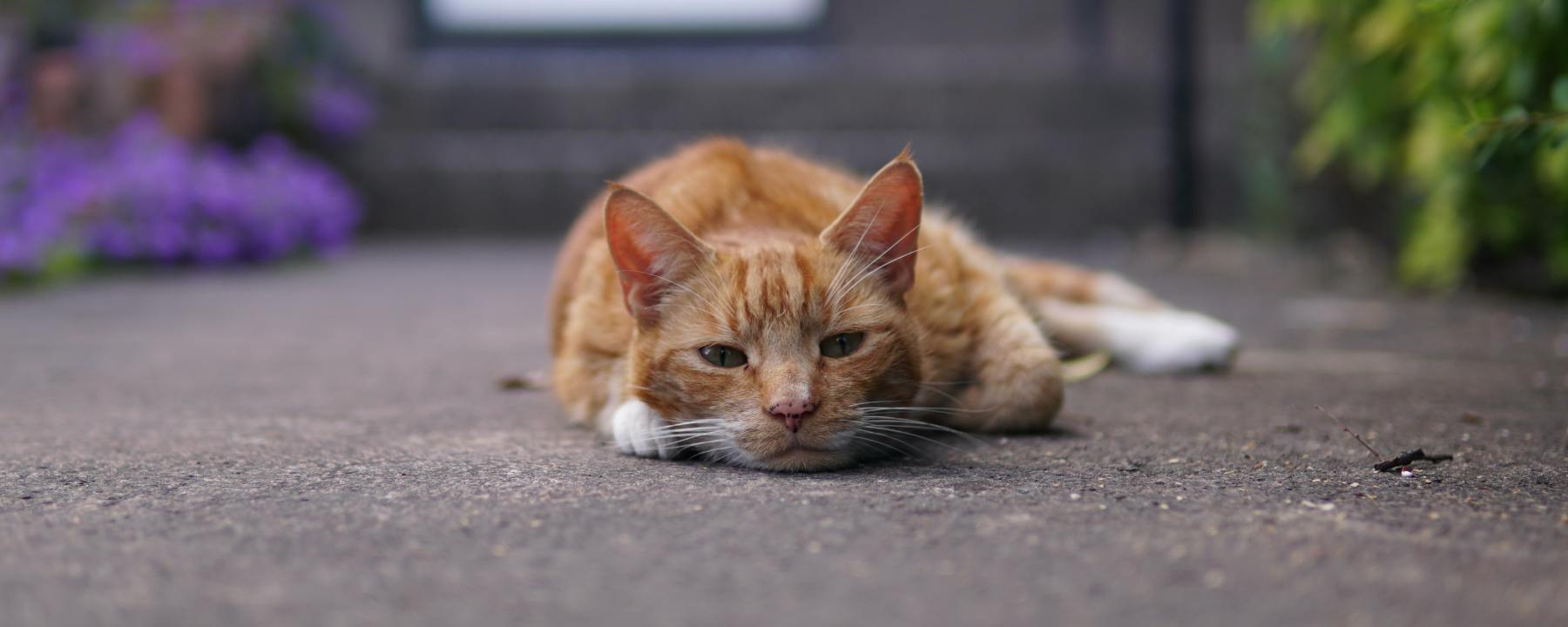a lazy cat in the middle of a sidewalk